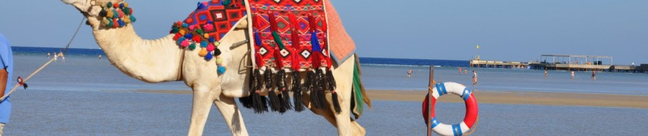 Egypten 2010 159